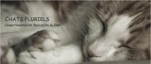 Ludivine Albert - Dialogue intuitif avec les animaux - Communication animale - Comportementaliste spécialiste du Chat